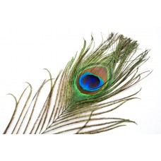 Peacock Feathers 4 Pack 28 cm